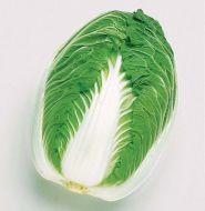 Blues (Cabbage/Chinese Napa)