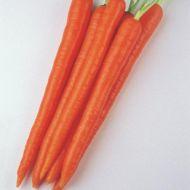Enterprise (Carrot/pellets)