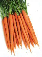Uppercut 25 (Carrot/hybrid/early)
