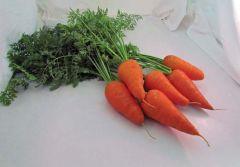 Danvers 126 (Carrot/processing)