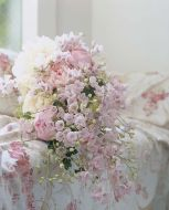 Jenny's Pearl Pink (Delphinium)