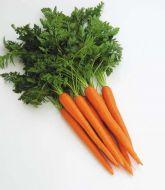 Maverick (Carrot/hybrid/Nantes x Imperator)