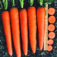 Envy (Carrot/hybrid/pelleted)