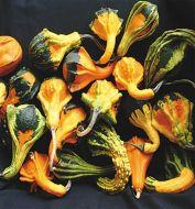 Autumn Wings Medium (Small Gourd)