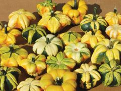 Daisy Mix (Small Gourd)