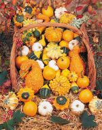Small Gourds Mix (Gourd)
