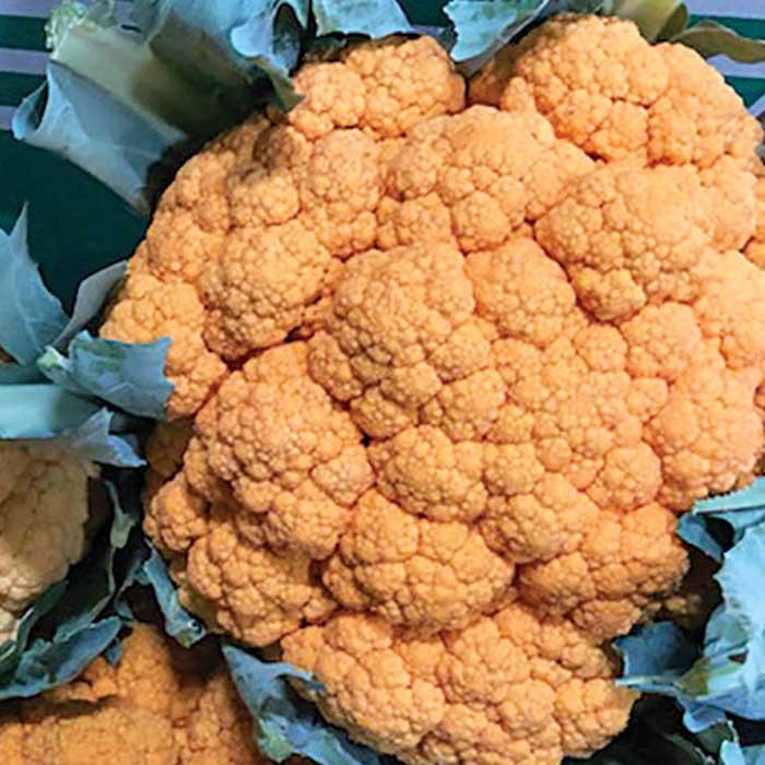 Clementine (Cauliflower/orange)