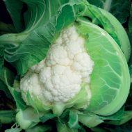 Apex (Cauliflower/main)