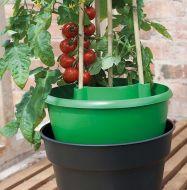 Plant Halos - 3 Pack - B1817
