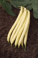 Gold Mine (Wax Bush Bean)