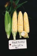 Gourmet Sweet™ Brand Awesome Corn (Hybrid, bicolor)
