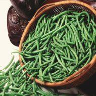 Bronco (Green Beans Bush)