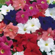 Dreams Mix (Petunia pellets/grandiflora)