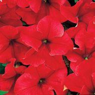 Dreams Red (Petunia/grandiflora/pellets)