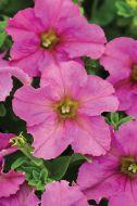 Sophistica Twilight (Petunia/grandiflora/pelleted)