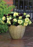 Sophistica® Blackberry (Petunia/grandiflora/pelleted)