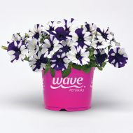 Shock Wave™ Purple Tie Dye (Petunia/milliflora/pelleted)
