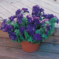 Double Cascade Blue (Petunia/double/pelleted)