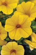 Kabloom Yellow (Calibrachoa Pellets)