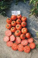 Mountain Fresh Plus VFFN (Hybrid Bush Tomato Pellets)