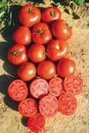 Scarlet Red VFF (Hybrid Bush Tomato Pellets)