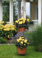 Nonstop Mocca Yellow (Begonia pellets/tuberous)