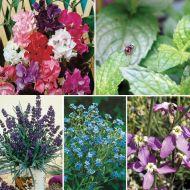 Fragrant Garden Special Collection