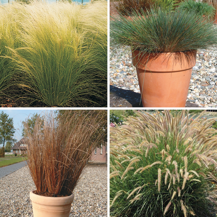 Ornamental Grasses Special Collection