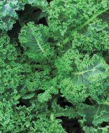 Vates Blue Curled (Kale/O/P/untreated)