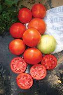 Primo Red (Hybrid Bush Tomato/untreated)