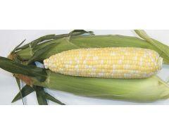 Bon Jour TSW® (SE corn, hybrid, bicolor)