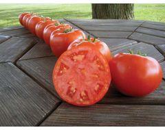 Mountain Merit VFFF/TSWV (Hybrid Tomato)