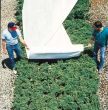 Floating Vegetable Row Cover 64 in x 250 ft