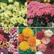 A Cutting Garden Special Collection