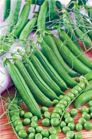 Sabre Garden Peas Mid Season Stokes Seeds