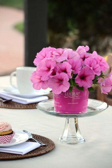 Easy Wave Pink Passion Petunia Multiflora Pelleted Stokes Seeds