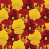 Panola® Autumn Blaze Mix (Pansy)