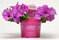 Lavender Wave® (Petunia/multiflora/pelleted)