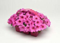 Easy Wave® Pink (Petunia/multiflora/pelleted)