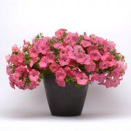 Easy Wave® Coral Reef (Petunia/multiflora/pelleted)