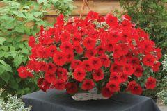 Opera Supreme Red (Petunia Pellets)