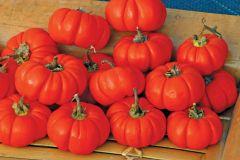 Pumpkin-on-a-Stick (Solanum Aethiopicum)
