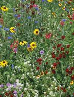 Bird & Butterfly Mix (Wildflowers)