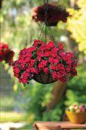 Mediterranean Red (Vinca)