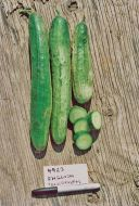 English Telegraph (Cucumber/slicing/untreated)
