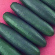 Talladega (Cucumber/slicing)