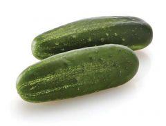 Citadel (Cucumber/pickling)