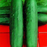 Dasher II (Cucumber/slicing)