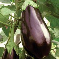 Cappi (Eggplant/hybrid)