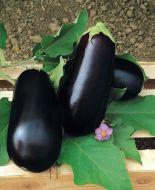 Nadia (Eggplant/hybrid)